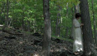 Paul Taylor Driftwood